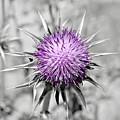 Purple Scrub by Jenny Revitz Soper