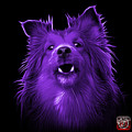 Purple Sheltie Dog Art 0207 - Bb by James Ahn