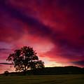 Purple Skies by Angel Ciesniarska