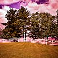 Purple Sky by Madeline Ellis