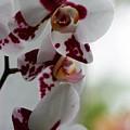 Purple Splash Orchid 1 by Kristina Jones