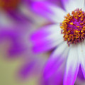 Purple Spring 7 by Alex Art and Photo
