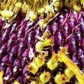 Purple Sunflower Seeds by SR Green