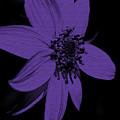 Purple Sunflower by Smilin Eyes  Treasures