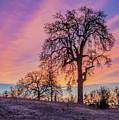 Purple Sunrise by Jonathan Hansen