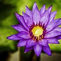 Purple Sunrise by Scott Pellegrin