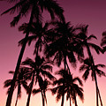 Purple Sunset by Carl Shaneff - Printscapes