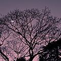 Purple Sunset by Fantho Audiovisual