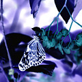 Purple Teal And A White Butterfly by Tracy Winter