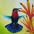 Purple-throated Carib And Bird Of Paradise by Christopher Cox
