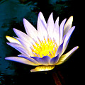 Purple Tipped Water Lily by Tisha Clinkenbeard