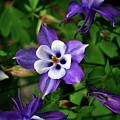 Purple Trio by Lori Tambakis