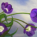 Purple Tulips by Laura Iverson