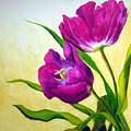 Purple Tulips by Scott Gordon