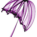 Purple Umbrella by Ann Garrett