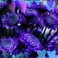 Purple  Valentine by Joan-Violet Stretch