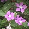 Purple Vintas Flower Photograph by Brenda Plyer