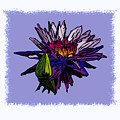 Purple Water Lily by John Lautermilch
