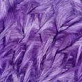 Purple Watercolor Art  by Kerri Farley