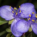 Purple Wild Flower by Ron Bennett