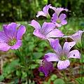 Purple Wildflowers Macro 2 by J M Farris Photography