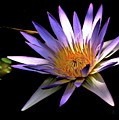 Purple Zen by Lisa Renee Ludlum
