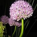 Purpleflower by Lyn Vic