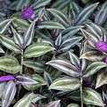 Purples In Leaf by Bruce Gourley