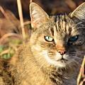 Purr-fect Kitty Cat Friend by Adrian DeLeon