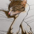 Purrfect Pose by Pookie Pet Portraits
