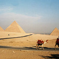 Pyramids At Giza by Pat Kenyon