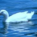 Quack Quack Said The Duck by Sherri's - Of Palm Springs