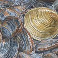 Quahog On Clams by Dominic White