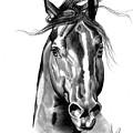 Quarter Horse Head Shot In Bic Pen by Cheryl Poland