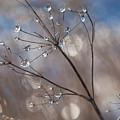 Queen Anne's Ice by Jane Melgaard