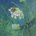 Queen Anne's Lace  by Laura Wilson