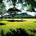 Queen Kapiolani Park by Kevin Smith