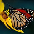 Queen Monarch 2 by David Weeks