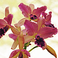 Queen Of Orchids by Debbie Oppermann