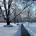 Queen's Park Pathway by Rick Shea