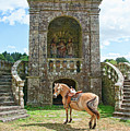 Quelven Village Square, Awaiting His Owner, Brittany, France by Curt Rush
