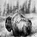 Quick Sketch - Bison by Aaron Spong