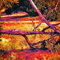 Quiet Meadow by Mariola Bitner