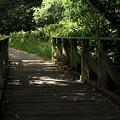 Quiet Path Bridge by Richard Thomas
