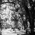 Quiet Walk by Amy Craft