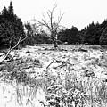 Quiet Winter Black And White by Debbie Oppermann