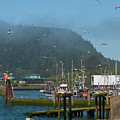Quileute Fishing Marina by Cascade Colors