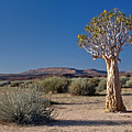 Quiver Tree And Desert by Aivar Mikko