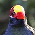 Quizzical Bird by David Lee Thompson