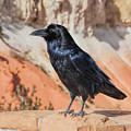 Quoth The Raven by John M Bailey